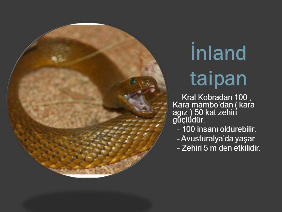 İnland taipan - Kral Kobradan 100 , Kara mambo'dan ( kara agız ) 50 kat zehiri güçlüdür. - 100 insanı öldürebilir.