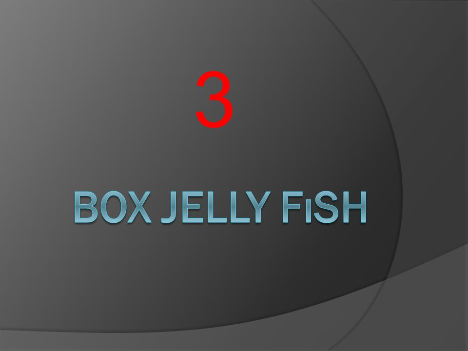 3 Box jelly fısh