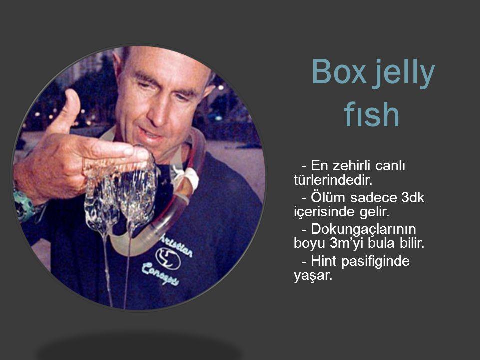 Box jelly fısh - En zehirli canlı türlerindedir.