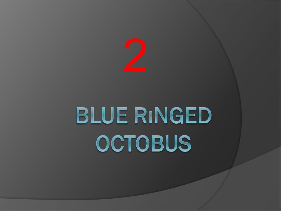2 Blue rınged octobus