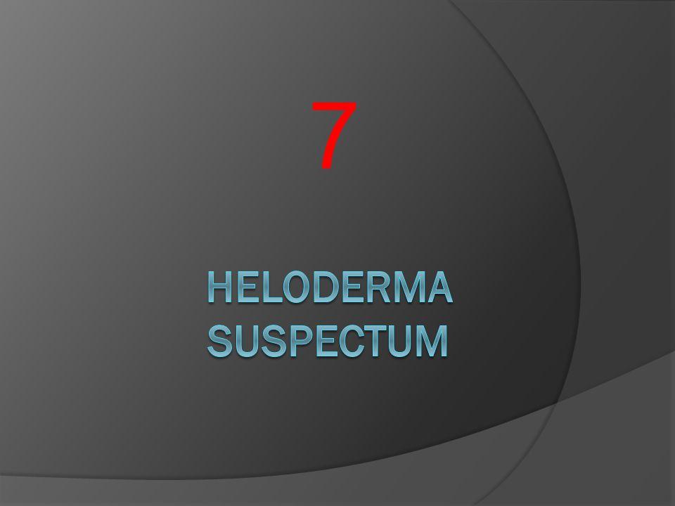 7 HELODERMA SUSPECTUM