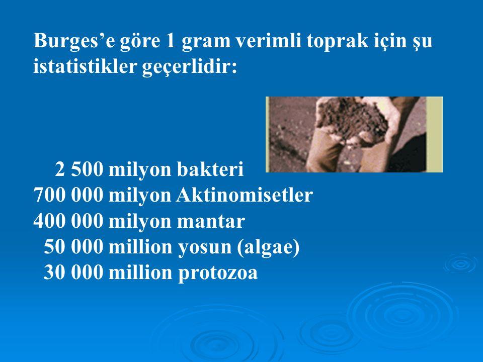 Burges'e göre 1 gram verimli toprak için şu istatistikler geçerlidir: