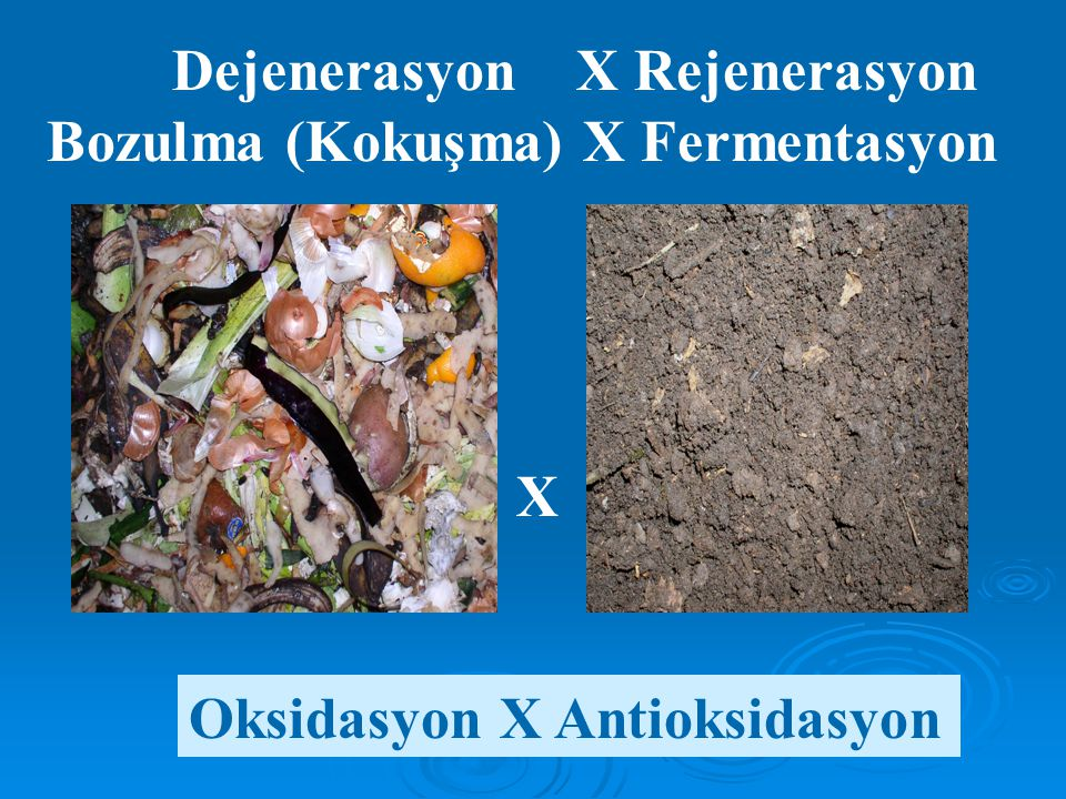 Dejenerasyon X Rejenerasyon