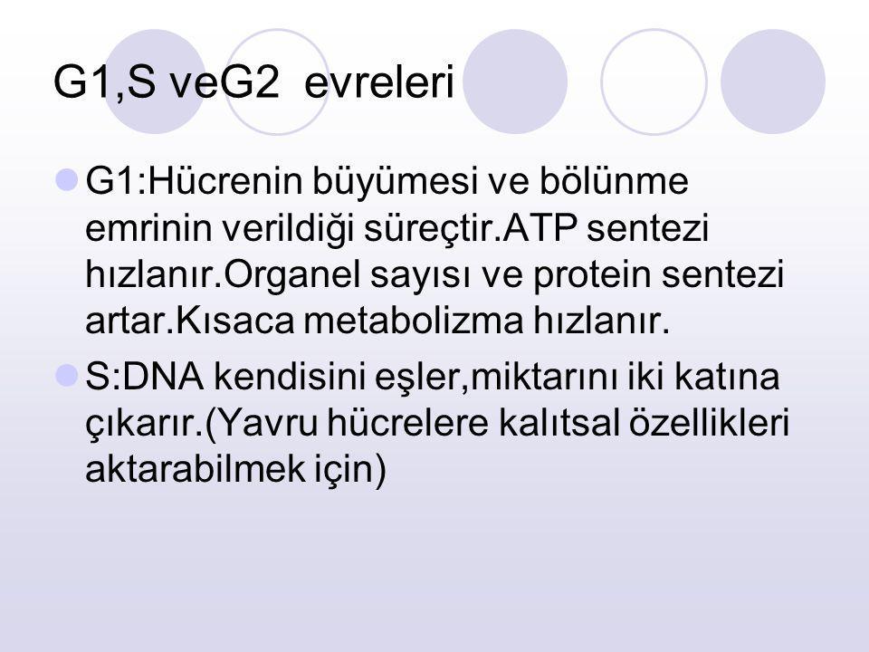 G1,S veG2 evreleri