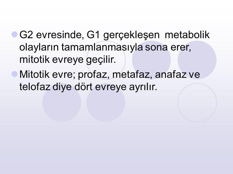 G2 evresinde, G1 gerçekleşen metabolik olayların tamamlanmasıyla sona erer, mitotik evreye geçilir.