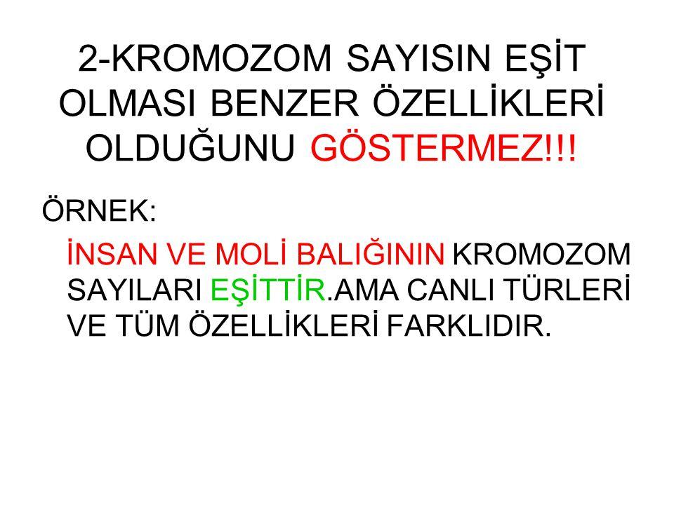 2-KROMOZOM SAYISIN EŞİT OLMASI BENZER ÖZELLİKLERİ OLDUĞUNU GÖSTERMEZ!!!