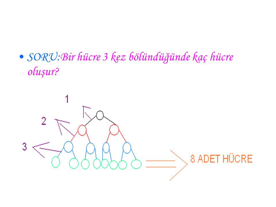 SORU:Bir hücre 3 kez bölündüğünde kaç hücre oluşur