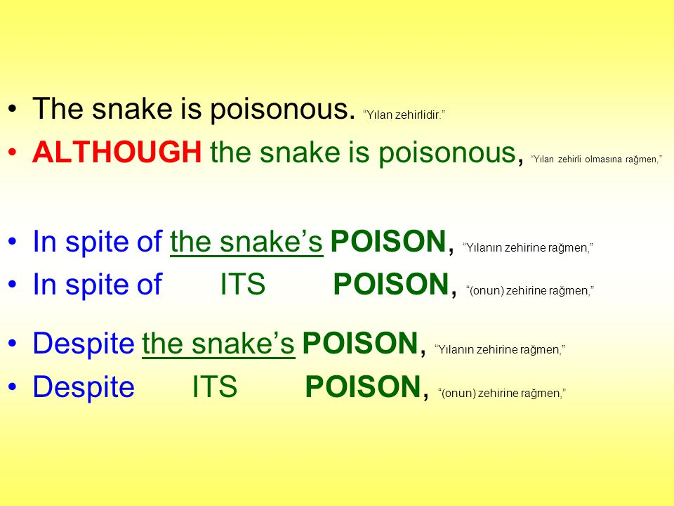 The snake is poisonous. Yılan zehirlidir.