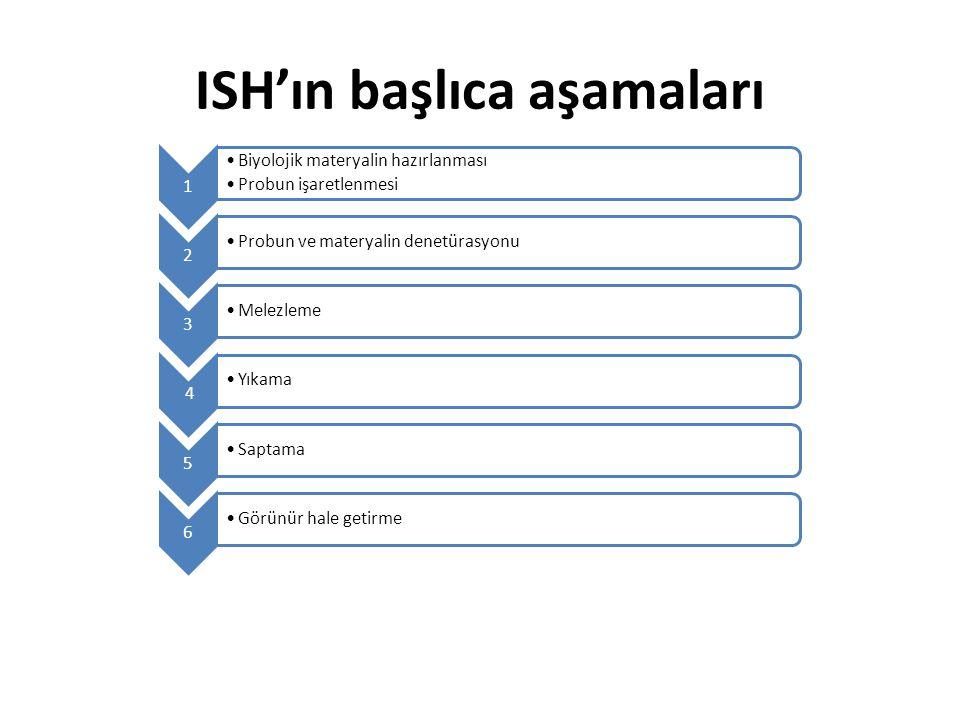 ISH'ın başlıca aşamaları