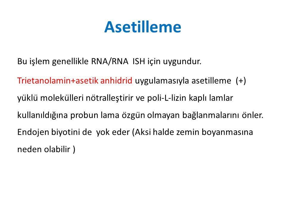 Asetilleme Bu işlem genellikle RNA/RNA ISH için uygundur.
