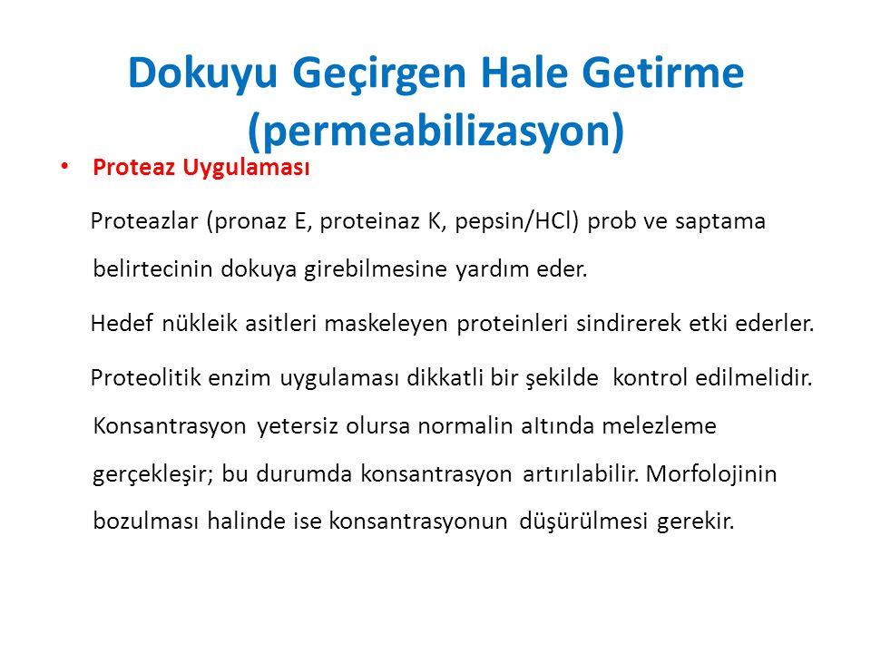 Dokuyu Geçirgen Hale Getirme (permeabilizasyon)