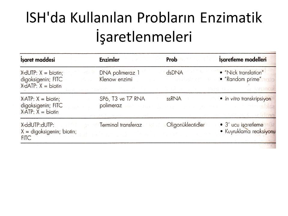lSH da Kullanılan Probların Enzimatik İşaretlenmeleri