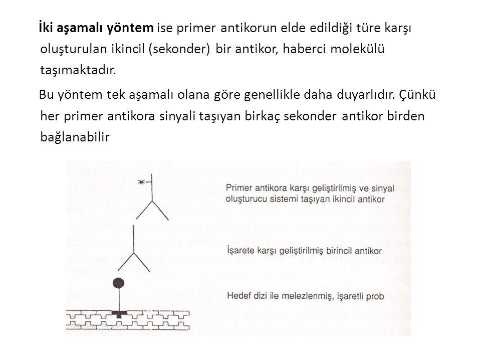 İki aşamalı yöntem ise primer antikorun elde edildiği türe karşı oluşturulan ikincil (sekonder) bir antikor, haberci molekülü taşımaktadır.