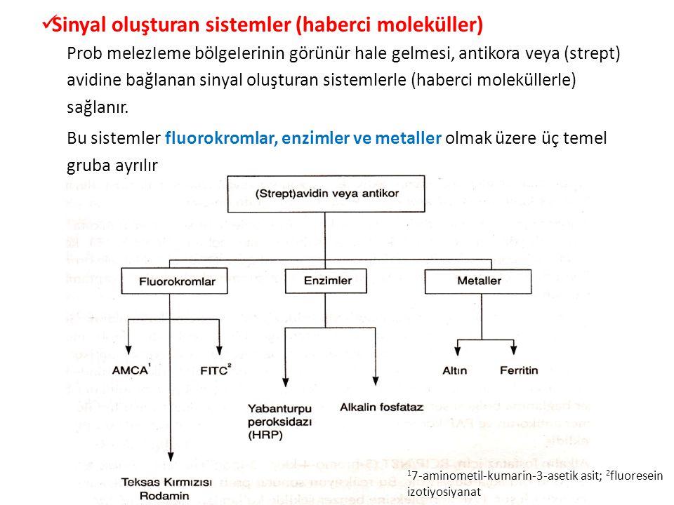 Sinyal oluşturan sistemler (haberci moleküller)