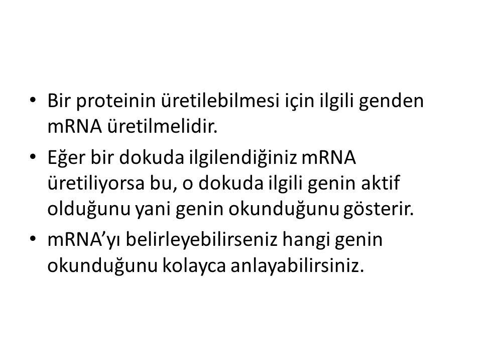 Bir proteinin üretilebilmesi için ilgili genden mRNA üretilmelidir.