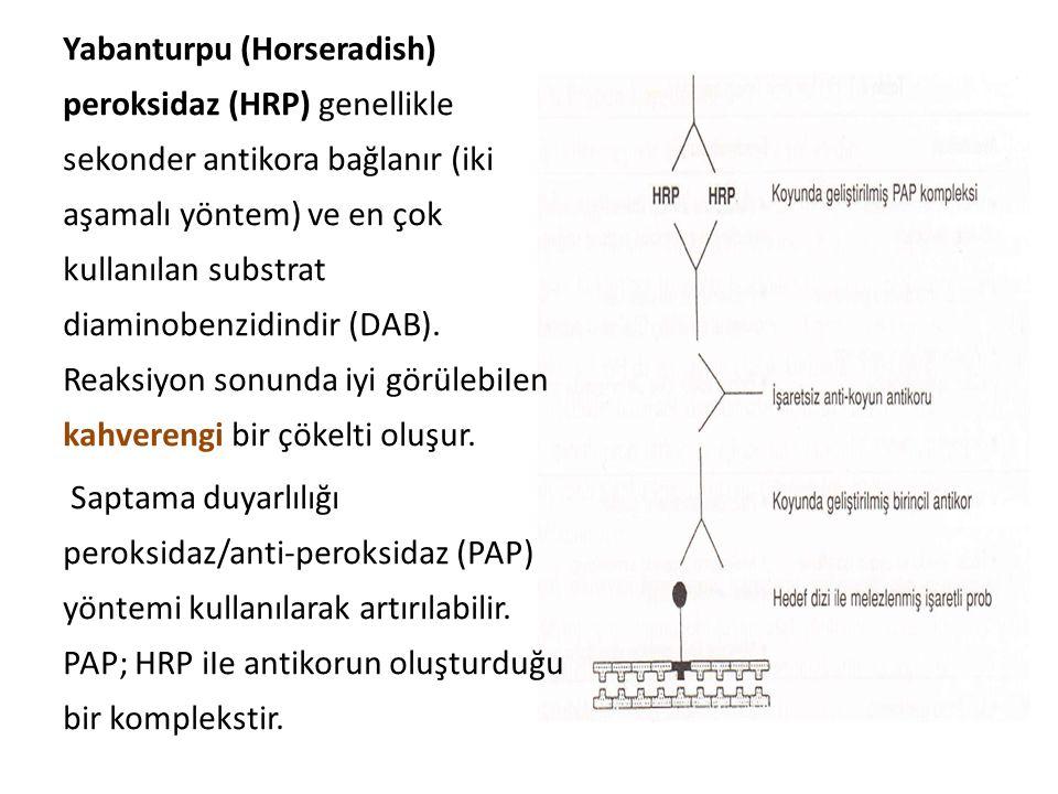 Yabanturpu (Horseradish) peroksidaz (HRP) genellikle sekonder antikora bağlanır (iki aşamalı yöntem) ve en çok kullanılan substrat diaminobenzidindir (DAB).