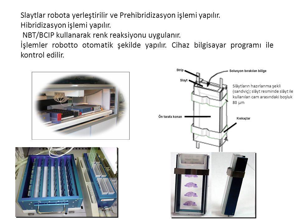 Slaytlar robota yerleştirilir ve Prehibridizasyon işlemi yapılır.