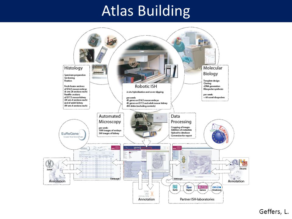 Atlas Building Geffers, L.