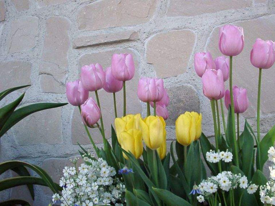 Bahar pembe beyaz olur güzeller neşeli olur