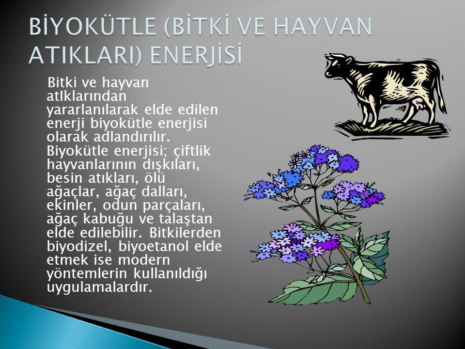 BİYOKÜTLE (BİTKİ VE HAYVAN ATIKLARI) ENERJİSİ
