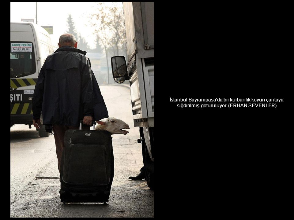 İstanbul Bayrampaşa da bir kurbanlık koyun çantaya sığdırılmış götürülüyor. (ERHAN SEVENLER)