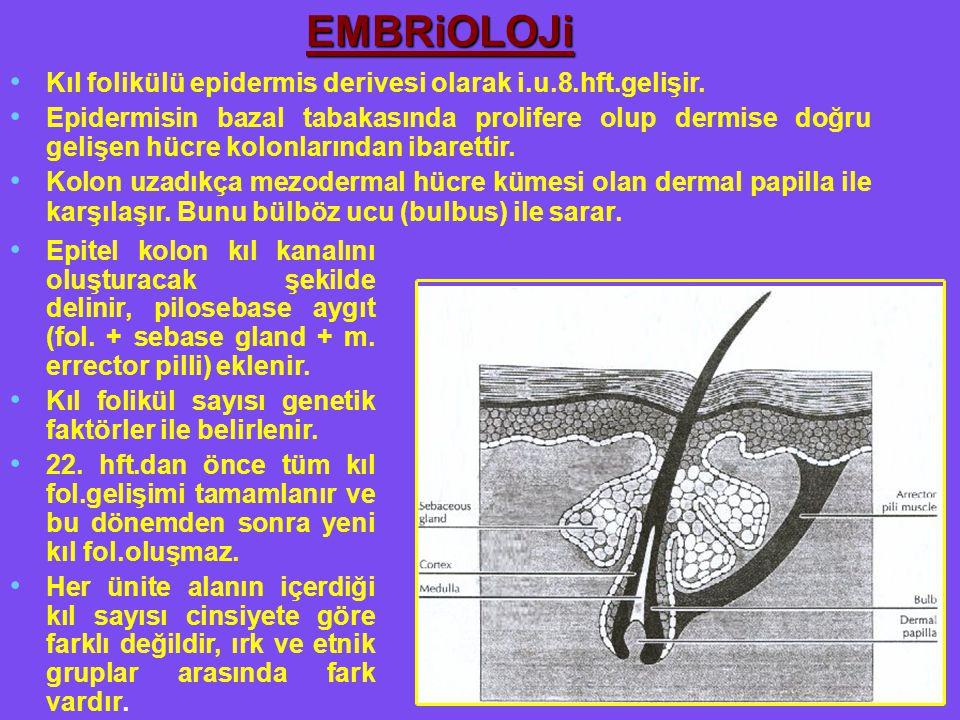 EMBRiOLOJi Kıl folikülü epidermis derivesi olarak i.u.8.hft.gelişir.