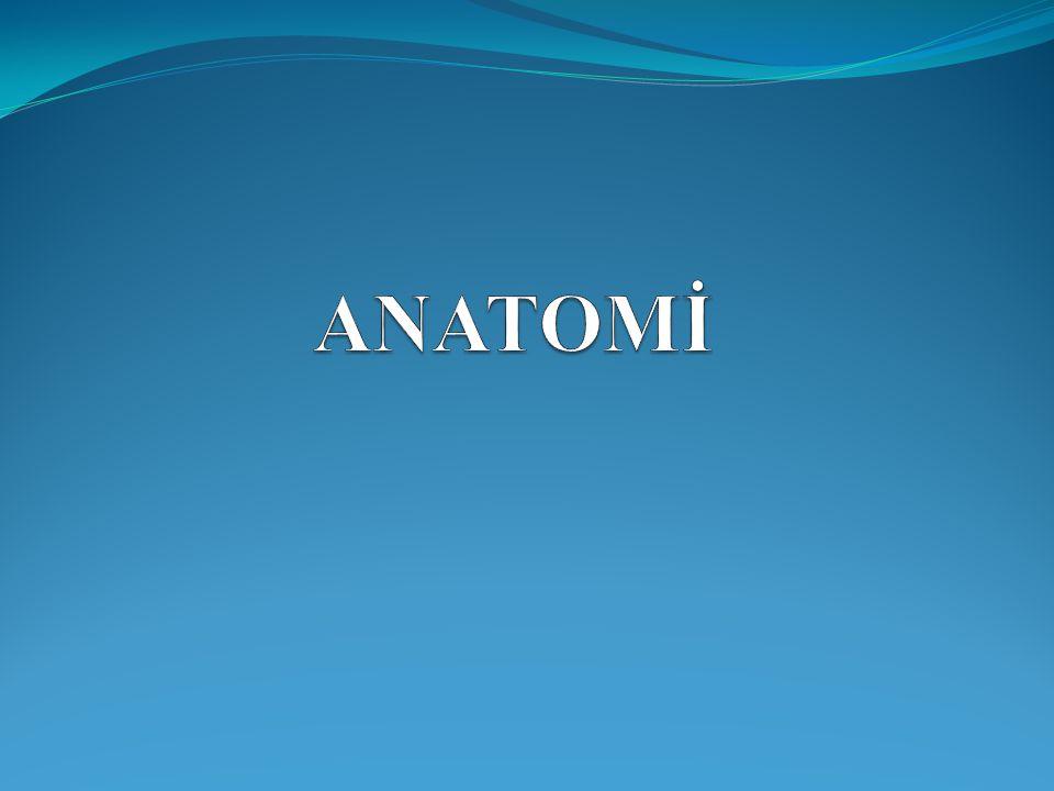 ANATOMİ