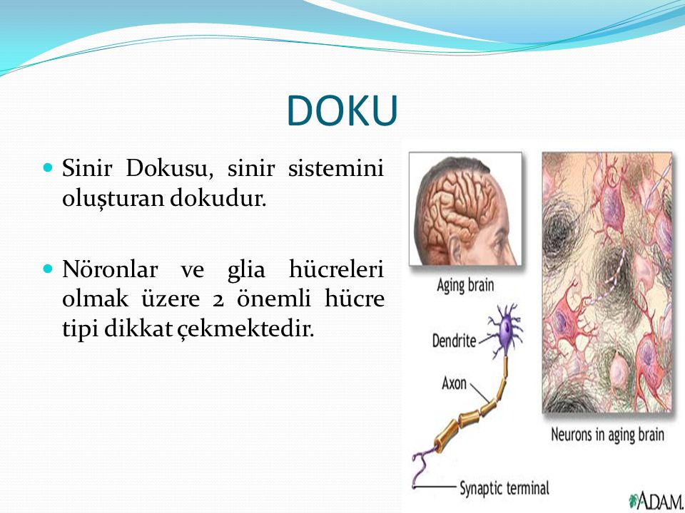 DOKU Sinir Dokusu, sinir sistemini oluşturan dokudur.