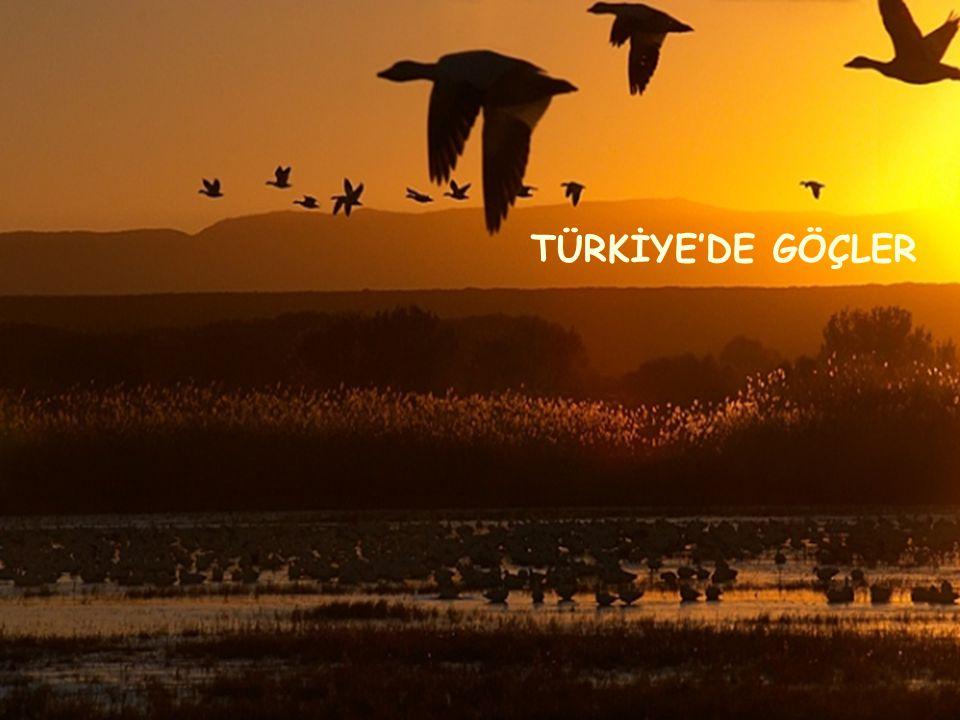 TÜRKİYE'DE GÖÇLER