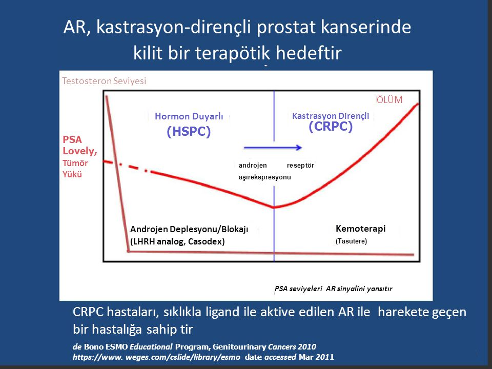 AR, kastrasyon-dirençli prostat kanserinde kilit bir terapötik hedeftir