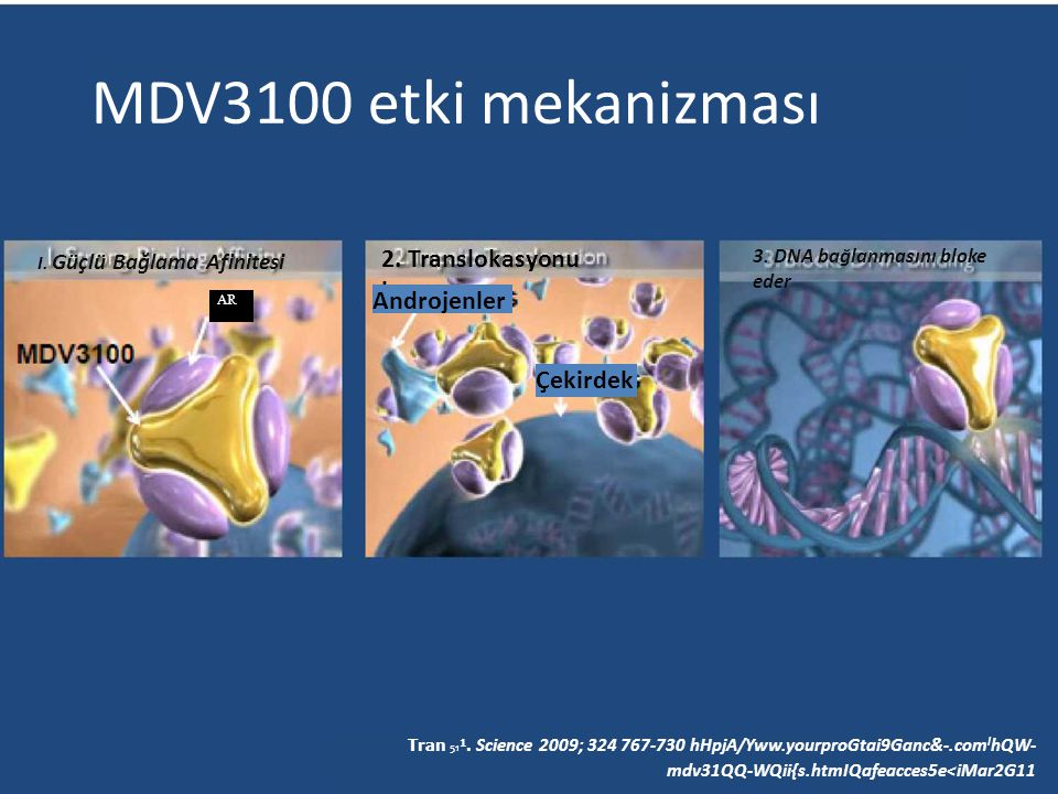 MDV3100 etki mekanizması 2. Translokasyonu bozar Androjenler Çekirdek