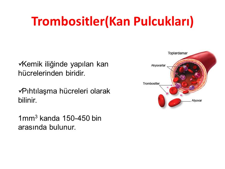 Trombositler(Kan Pulcukları)
