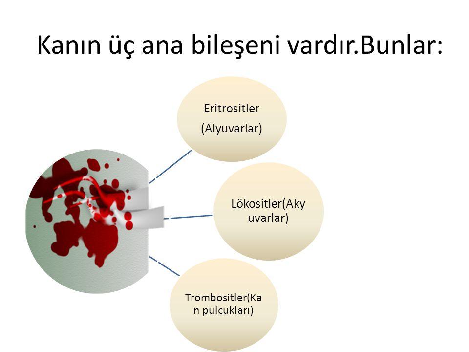 Kanın üç ana bileşeni vardır.Bunlar: