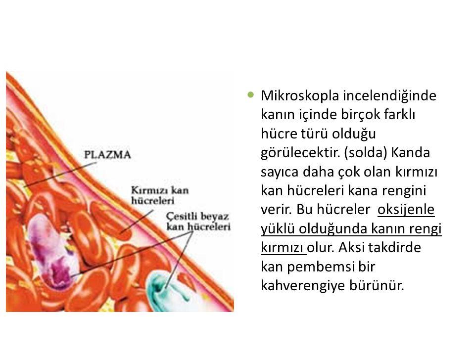 Mikroskopla incelendiğinde kanın içinde birçok farklı hücre türü olduğu görülecektir.
