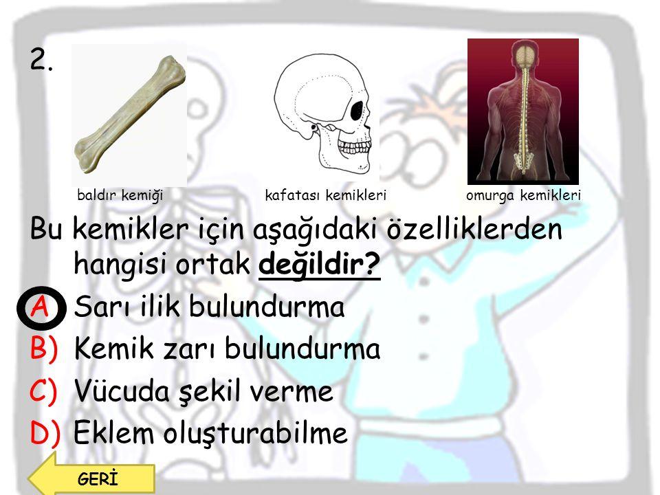 Bu kemikler için aşağıdaki özelliklerden hangisi ortak değildir