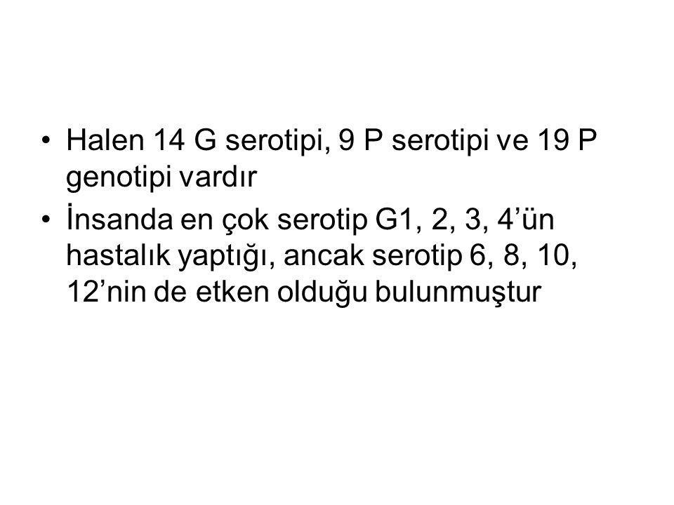 Halen 14 G serotipi, 9 P serotipi ve 19 P genotipi vardır