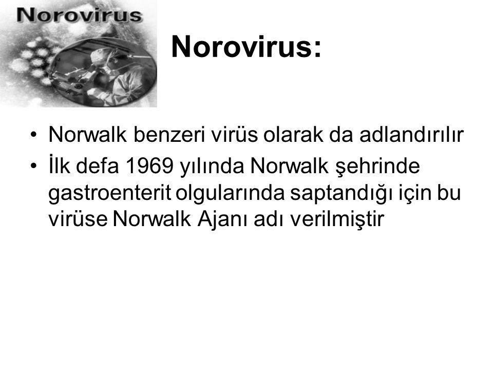 Norovirus: Norwalk benzeri virüs olarak da adlandırılır