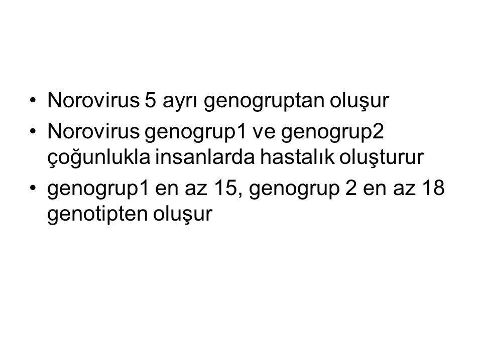 Norovirus 5 ayrı genogruptan oluşur