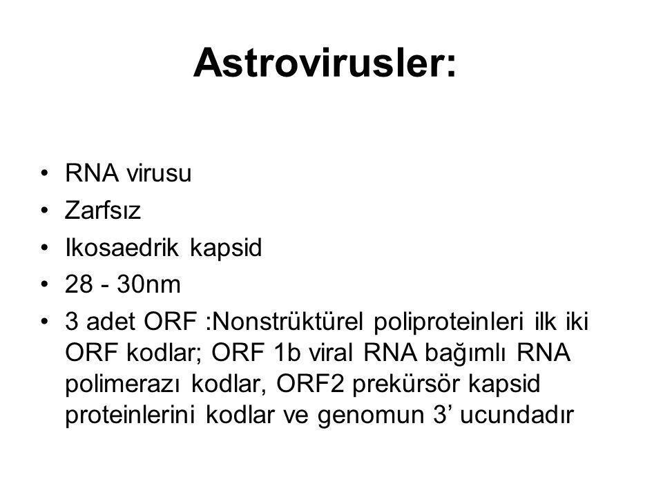 Astrovirusler: RNA virusu Zarfsız Ikosaedrik kapsid 28 - 30nm