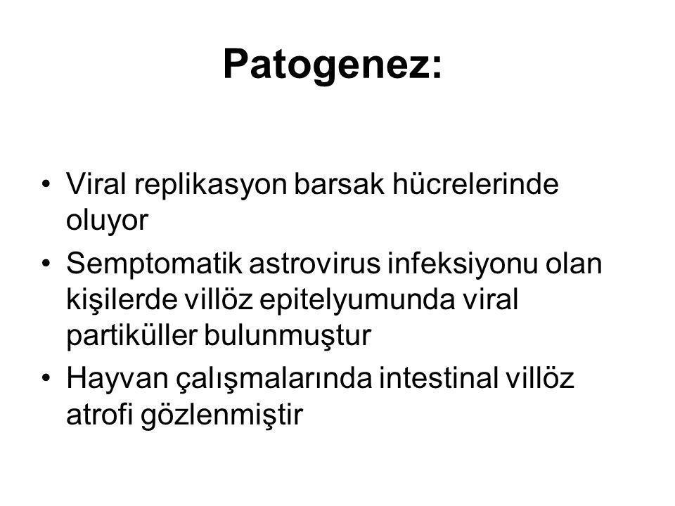 Patogenez: Viral replikasyon barsak hücrelerinde oluyor