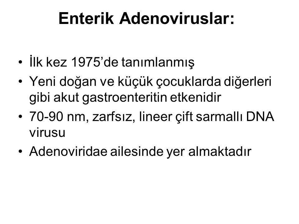 Enterik Adenoviruslar: