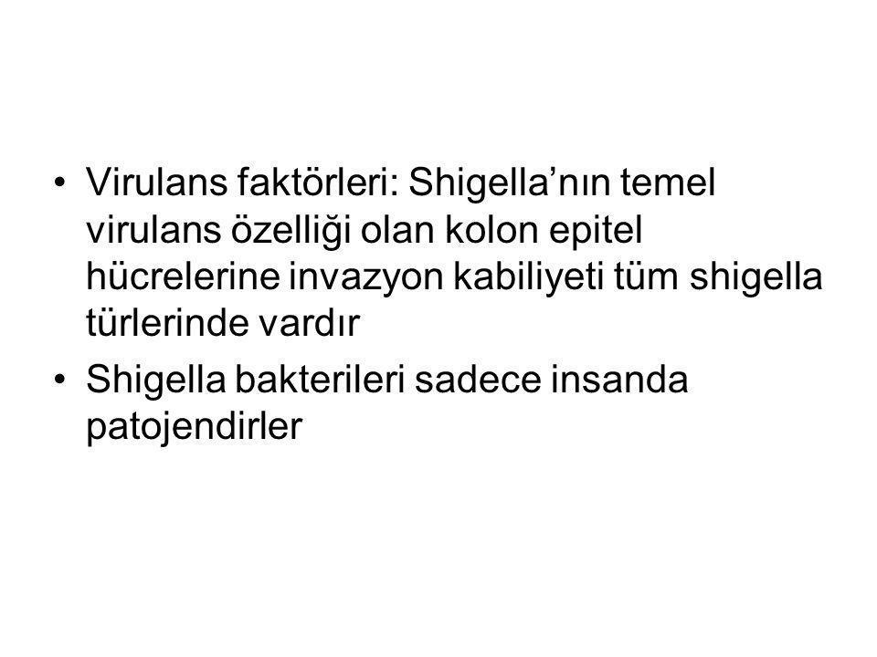 Virulans faktörleri: Shigella'nın temel virulans özelliği olan kolon epitel hücrelerine invazyon kabiliyeti tüm shigella türlerinde vardır