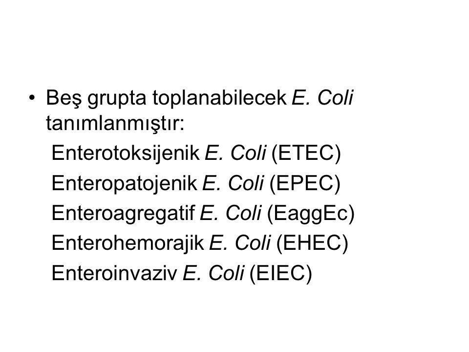 Beş grupta toplanabilecek E. Coli tanımlanmıştır: