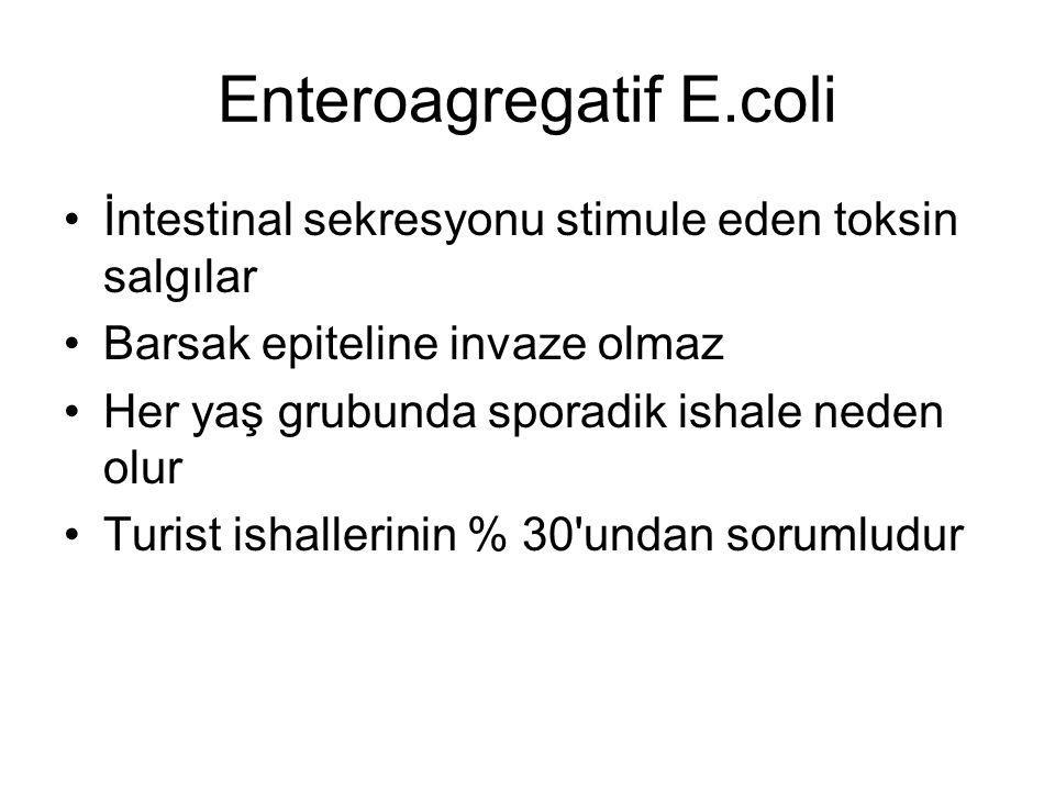Enteroagregatif E.coli