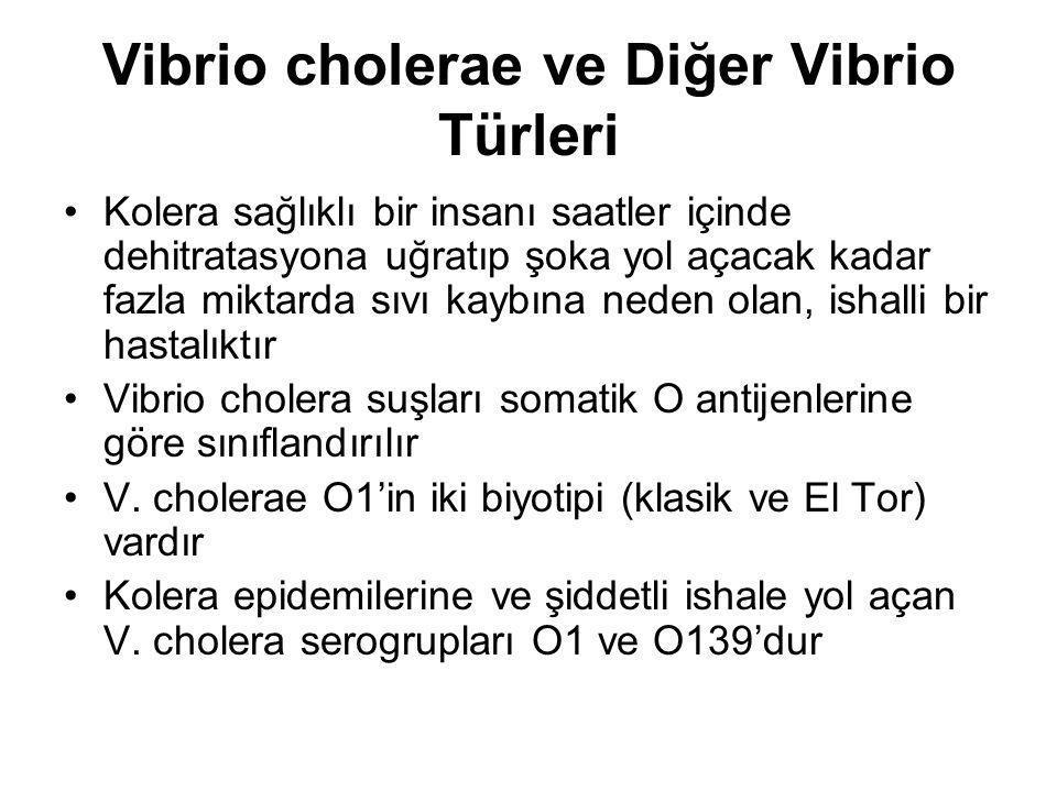 Vibrio cholerae ve Diğer Vibrio Türleri