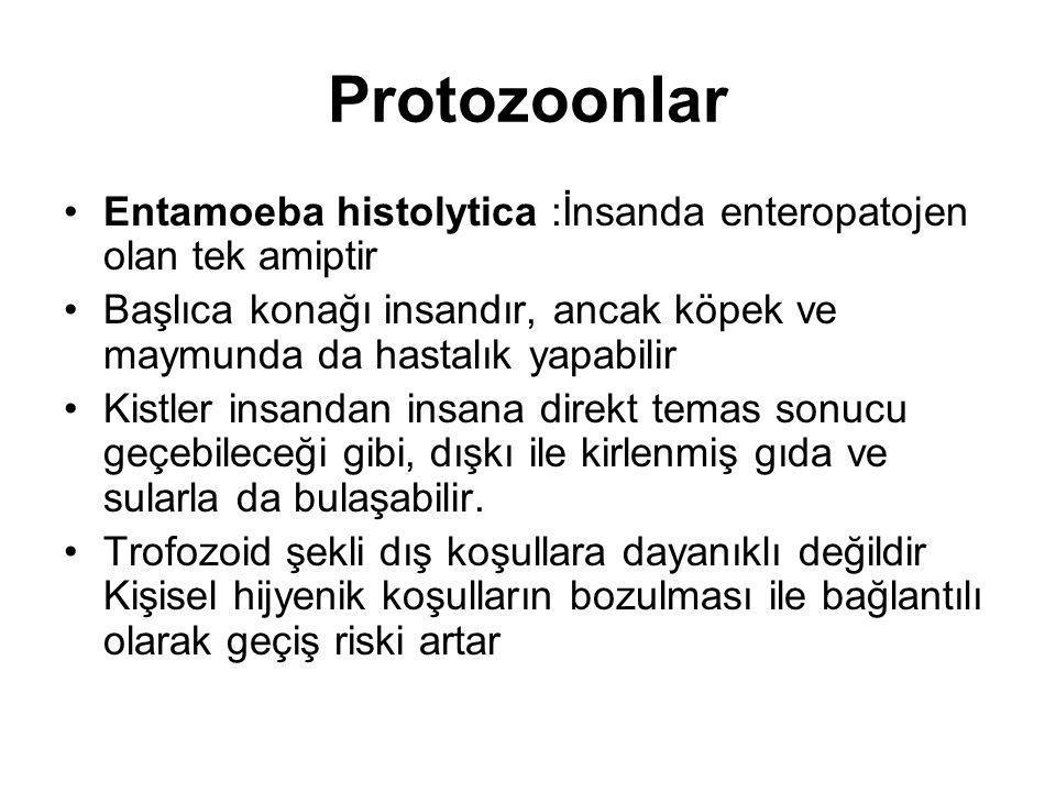 Protozoonlar Entamoeba histolytica :İnsanda enteropatojen olan tek amiptir. Başlıca konağı insandır, ancak köpek ve maymunda da hastalık yapabilir.