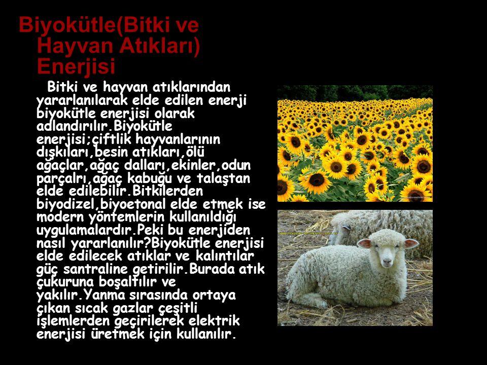 Biyokütle(Bitki ve Hayvan Atıkları) Enerjisi