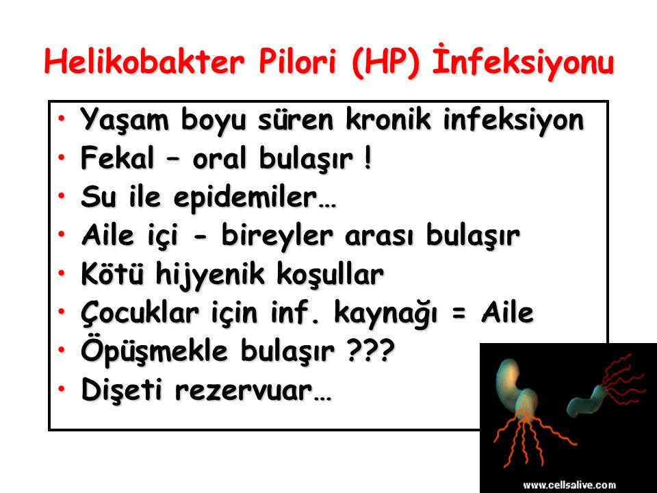 Helikobakter Pilori (HP) İnfeksiyonu