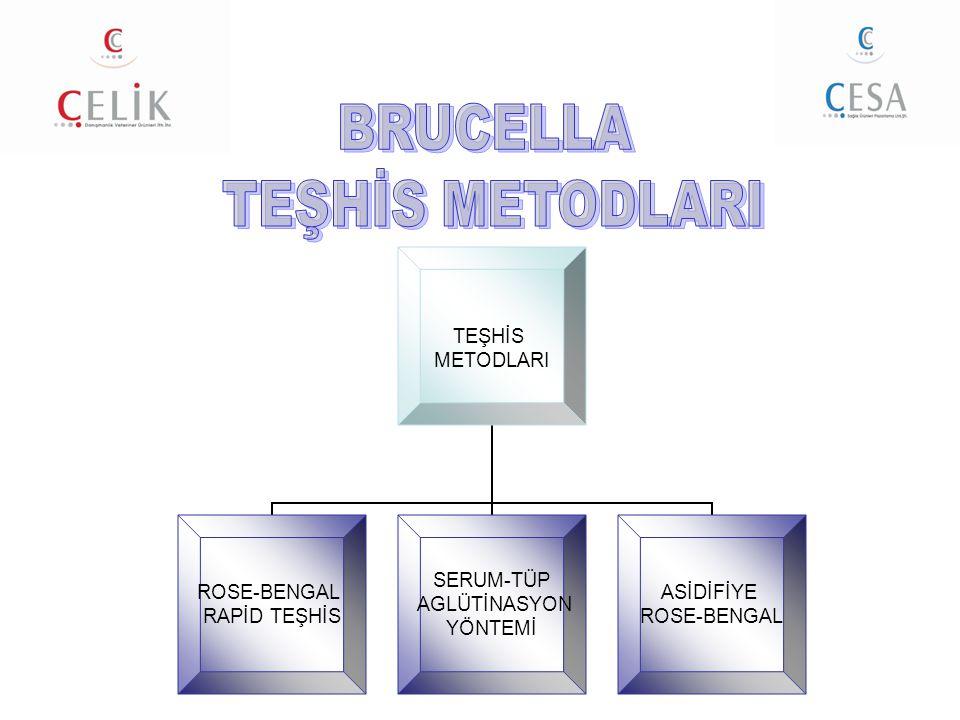 BRUCELLA TEŞHİS METODLARI