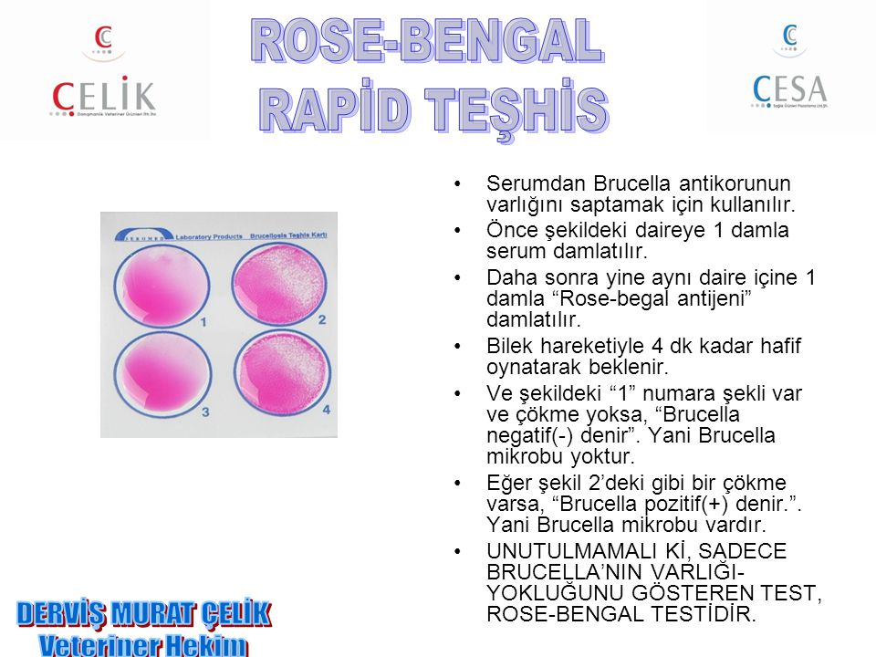 ROSE-BENGAL RAPİD TEŞHİS DERVİŞ MURAT ÇELİK Veteriner Hekim